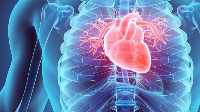 Stock illustration of human body with heart