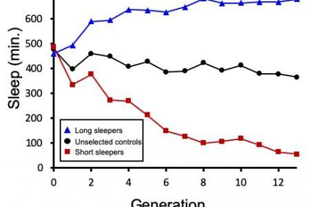 Sleep duration over generations