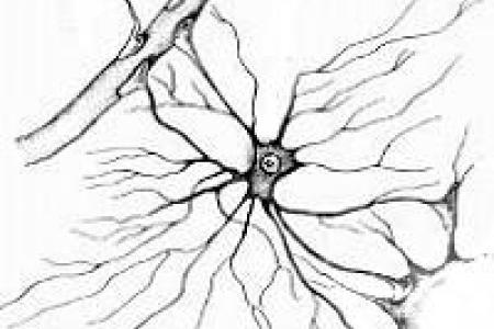 Astrocyte Extracellular Matrix