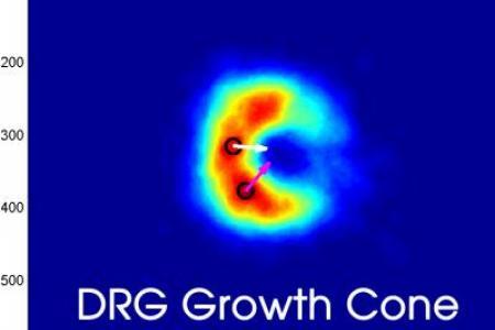 Biophysics of Growth Cones