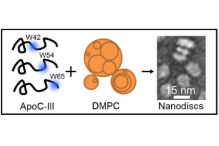 Apolipoprotein C-III nanodiscs studied by site-specific tryptophan fluorescence