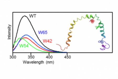 Tryptophan probes reveal residue-specific phospholipid interactions of apolipoprotein C-III