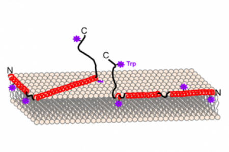 Molecular details of α-synuclein membrane association probed by neutrons and photons