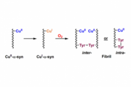 Evidence for copper-dioxygen reactivity during α-synuclein fibril formation