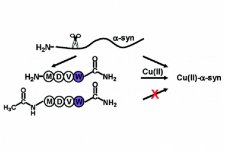 Identification of the minimal copper(II)-binding α-synuclein sequence