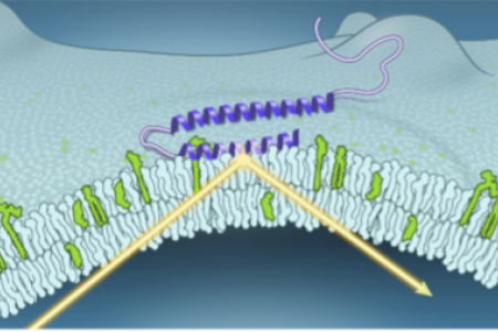 Membrane interactions of α-synuclein probed by neutrons and photons
