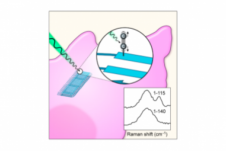 Terminal alkynes as Raman probes of α-synuclein in solution and in cells